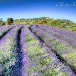 LavenderFieldsYogaMeditationRetreat22