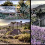 LavenderFieldsYogaMeditationRetreat8